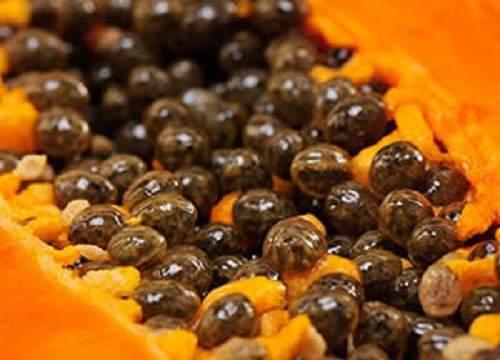 sementes-de-papaia-500×360