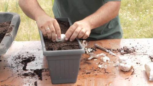 Cultivar-ajo-500x281-500x281