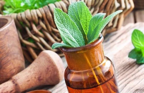 Plantas-medicinais-500×325-500×325