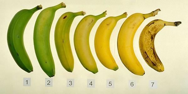 É-mais-saudável-comer-a-banana-quando-ela-está-madura-ou-verde