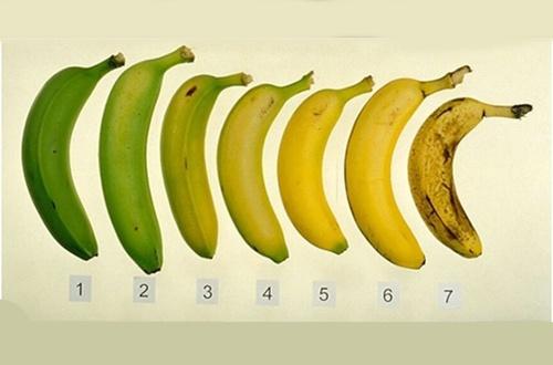 Banana-verde-ou-madura-500x330-500x330