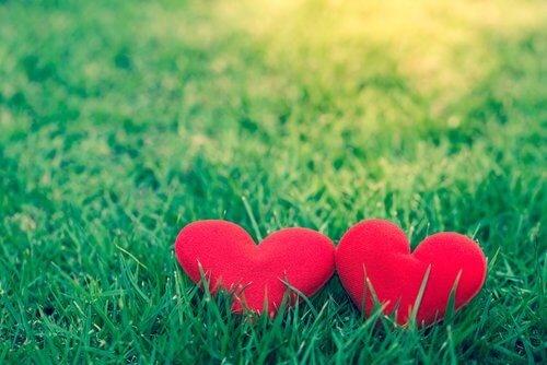 2-Amor-admiração-500x334