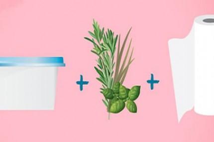 Dica-para-manter-ervas-e-temperos-frescos-por-até-um-mês-430×285
