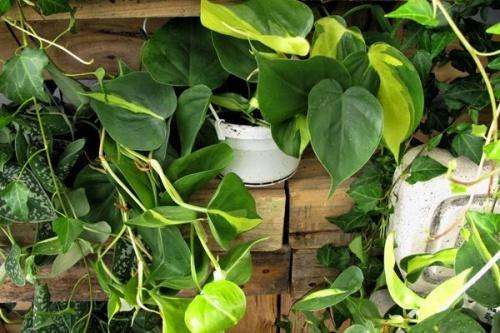 Plantas-de-interiores-500×333-500×333