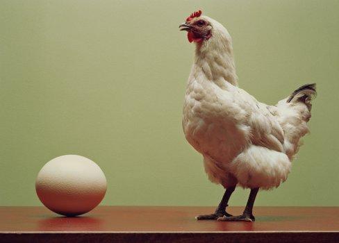 Quem-surgiu-primeiro-o-ovo-ou-a-galinha-A-ciência-responde