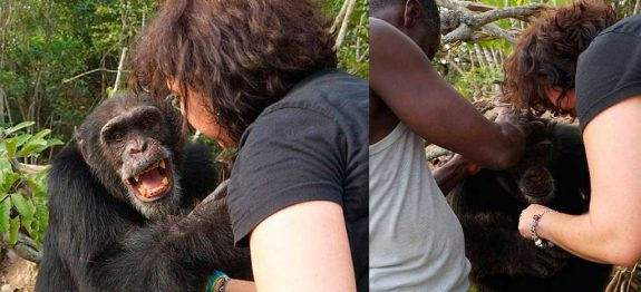 large_mulher-reencontro-chimpanze-1