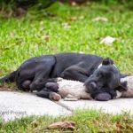 A foto desse cachorro de rua dormindo com um ursinho de pelúcia não é tão fofa assim. Ela esconde algo ainda maior