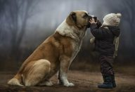 large_Animals___Dogs_A_child_with_a_big_dog_095280_