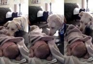 large_cachorro_cobre_bebe