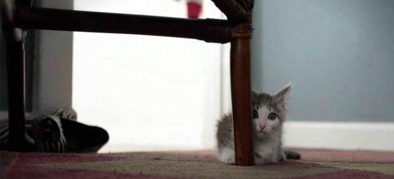 large_gato-adotado