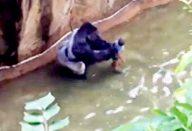 large_gorila-capa