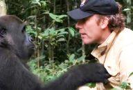 large_gorila-reencontro