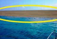 large_ilha-surge-capa
