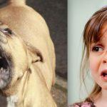 Todos os dias o cachorro esperava por esta garota. Quando ela fez 5 anos, tudo mudou de repente!