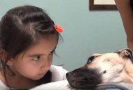 Ela-olha-nos-olhos-de-um-cão-a-morrer.-Segundos-depois-Um-milagre…