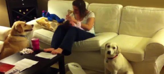 crianca-esta-fazendo-birra-agora-veja-como-o-cao-reage-sensacional